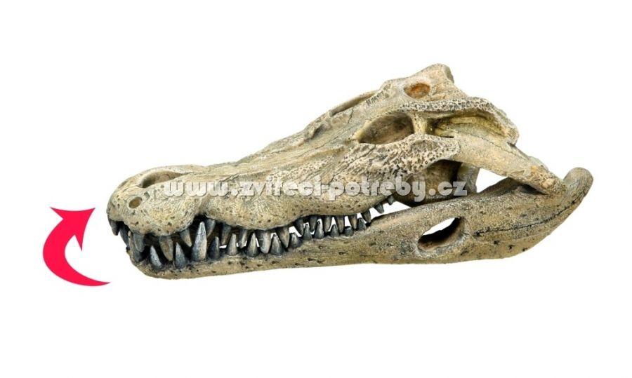 Nobby vzduchovací akvarijní dekorace kostra krokodýl 26 x 14 x 9 cm