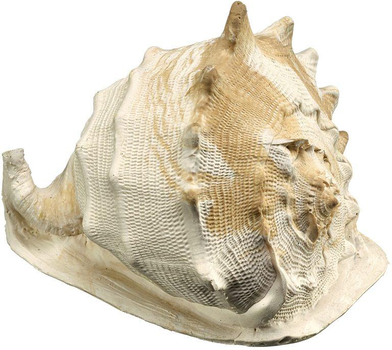 Nobby akvarijní dekorace mušle 12,5 x 10,5 x 9,5 cm