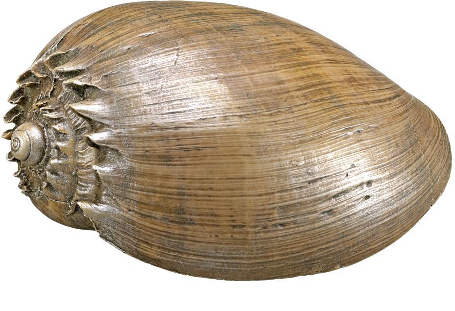 Nobby akvarijní dekorace mušle 14 x 9,2 x 7 cm