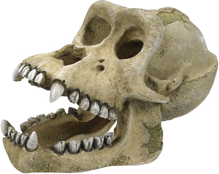Nobby akvarijní dekorace Gorilí lebka 18,7 x 10 x 11,5 cm