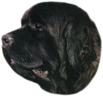 Novofundlandský pes samolepka 2ks