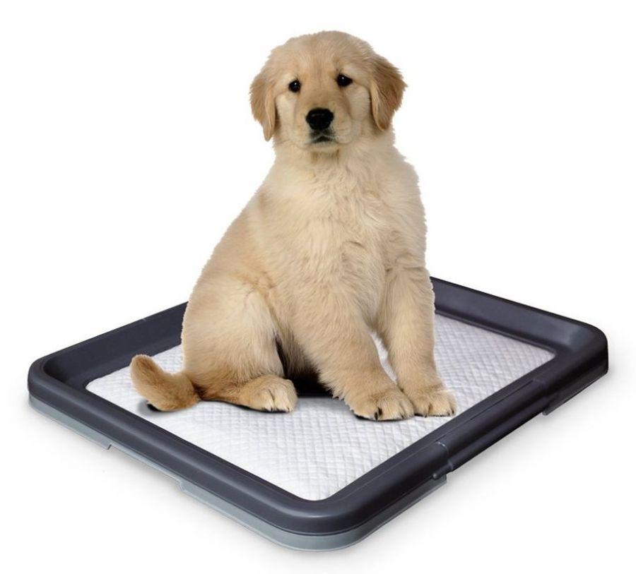 Nobby Doggy Trainer L plastové WC na podložky pro štěňata 62,5 x 48 x 3,8 cm
